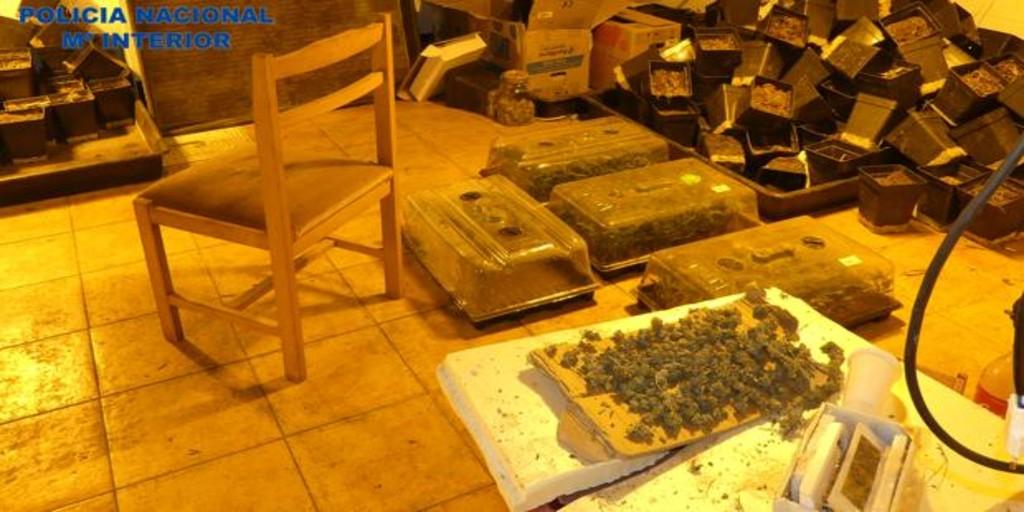 Detienen a dos okupas por convertir la casa asaltada en una plantación de marihuana