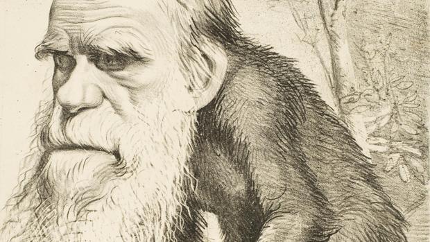 Caricatura de Darwin usada para desacrreditar su teoría de la evolución
