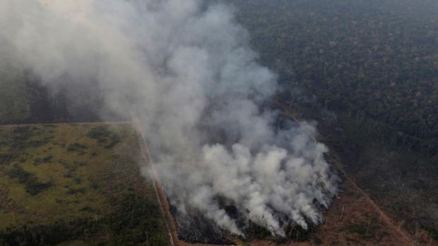 Los incendios de Bolivia y Brasil extenderán el cultivo de coca y soja