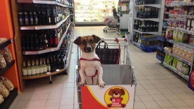 Los carritos de la compra de un supermercado italiano cuentan con un espacio reservado para los perros de pequeño tamaño