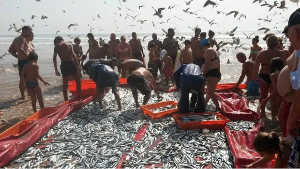 Los datos analizados por los científicos del ICM provienen de capturas pesqueras y de artículos publicados durante 1950-2011