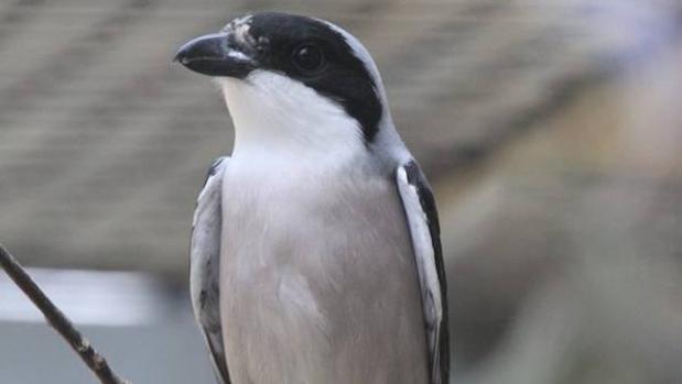 El Gobierno declara a estas 7 especies en peligro crítica de extinción