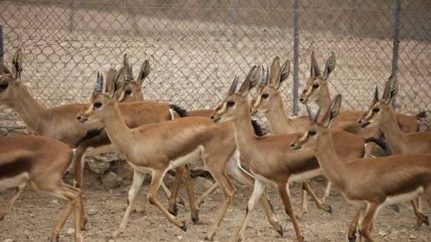 Namibia subastará un millar de animales silvestres para evitar que mueran de hambre