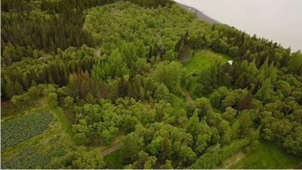 Islandia intenta recuperar los árboles arrasados por los vikingos dentro de su plan de acción climática
