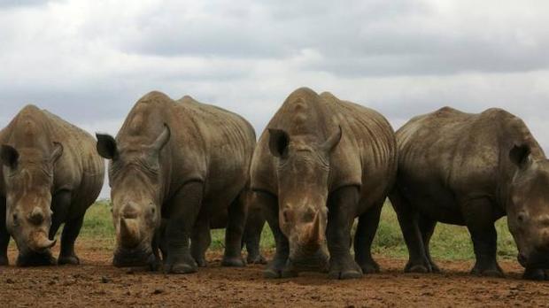 Condena de 37 años de cárcel para un furtivo que mató a un rinoceronte y su cría en el Parque Nacional Kruger en 2015