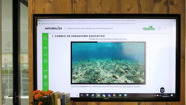 Naturaliza ofrece a los docentes formación on line y recursos educativos en educación ambiental
