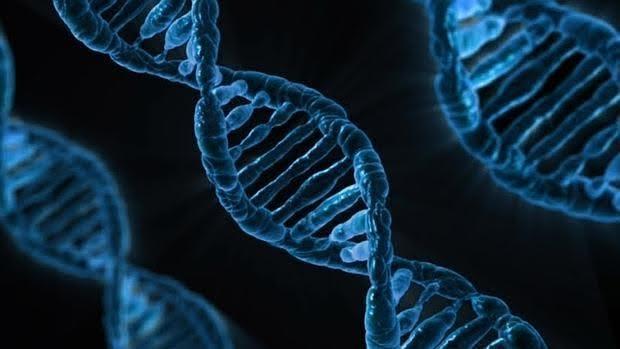 La capacidad de las células de reparar los daños en su ADN disminuye con la edad