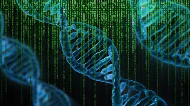 Se utilizaron ratones diseñados para producir células T humanas