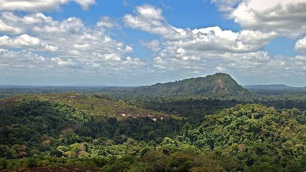 Los investigadores consideran que los bosques amazónicos proporcionan servicios ambientales de importancia global, y que por eso también hay que controlar también la caza