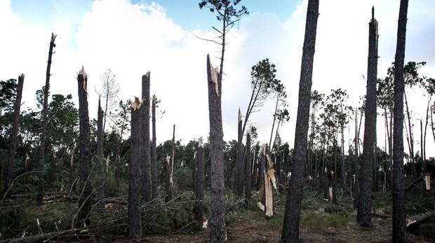 Árboles quebrados en Figueira