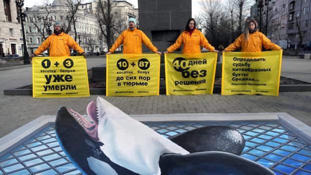 Activistas de la organización ecologista Greenpeace participan en una protesta para pedir la liberación de casi un centenar de orcas y belugas