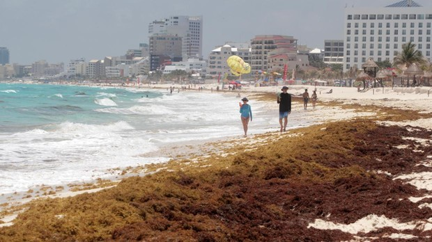 Sargazo en una playa de Cancún (México)