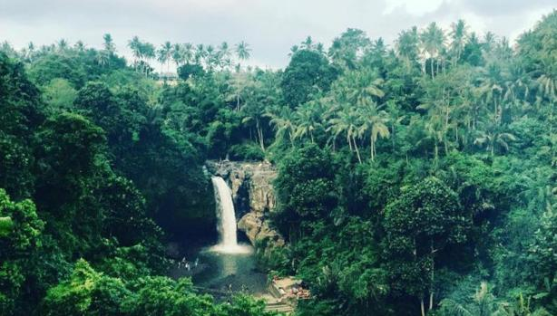 Con esta misión quiere concienciar a la gente sobre la importancia de la conservación de los bosques