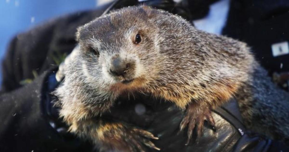 Imagen de una marmota
