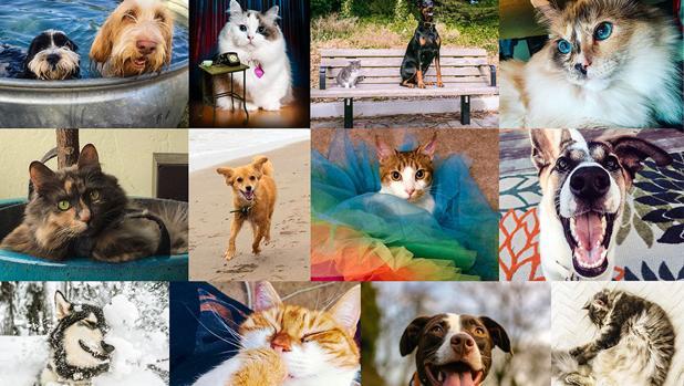 Los dueños de perros y gatos diferen a la hora de compartir publicaciones en Facebook